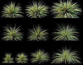 3D Yucca plant for the exterior 10 models