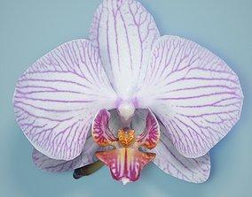 3D asset Orchid