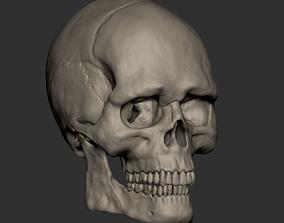 American male skull 3D model