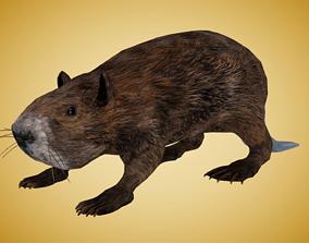 beaver 3D model low-poly Beaver