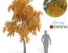 Birch Tree No 3 Autumn Version 3D model