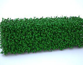 3D model Realistic bush - Hedge
