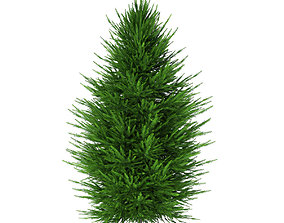 3D Norway Spruce Picea abies 2m 1