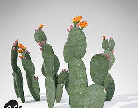 XfrogPlants Prickly Pear 3D model