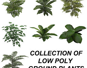 Tropical Plant Collection 3D asset