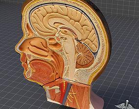 Human Head Anatomy 3D model