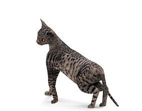 rigged 3D Black cat Rigged model