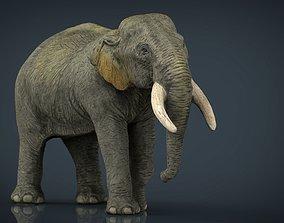 Asian Elephant Mother 3D model