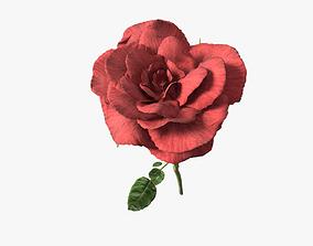Red rose 3D model garden