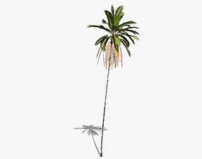 Coconut Palm Tree 16245 3D asset