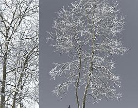 3D Ash-tree 04 winter H18m