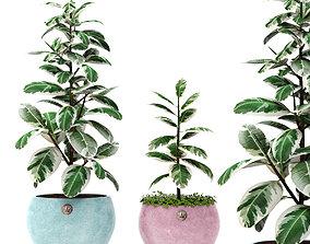 3D model Ficus