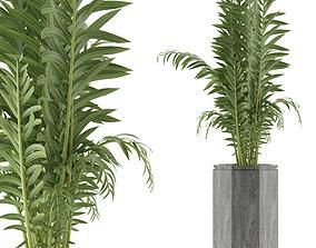 3D House Plant 40