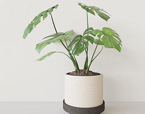 3D PBR Monster Pot Plant