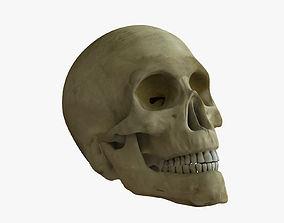 Skull Rigged 3D model