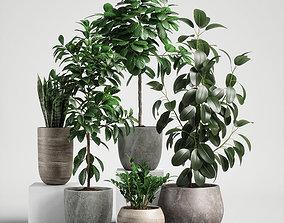 plants set 10 3D model