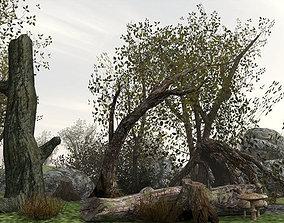 Brush Wood 3D asset