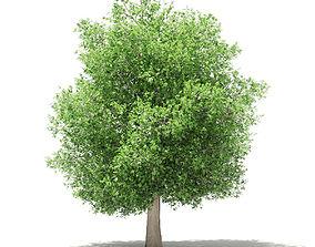 3D model exterior Common Fig Tree