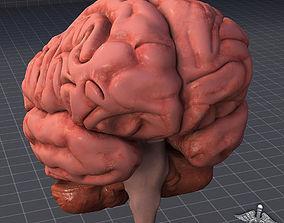 neurology Human Brain 3D model