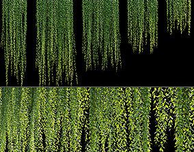 3D model Vernonia Elliptica - Curtain creeper