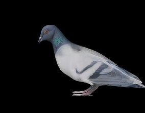 3D model game-ready Low poly pigeon rigged