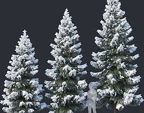 3D model Spruce Nr4 Three sizes H430-650cm Modular 1