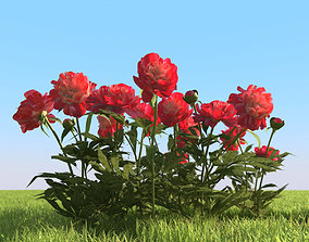 3D model Flowerbed with peonies
