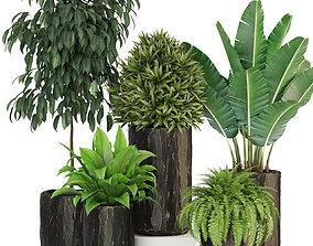 Plants collection 441 3D model