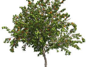 3D model low-poly Peach Tree