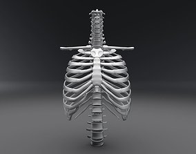 3D Human Spine and Rib Articulated
