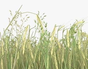 wheat field 3D