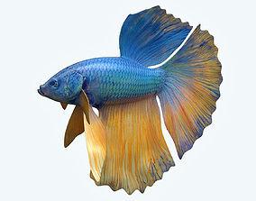 Betta Fish 10 3D