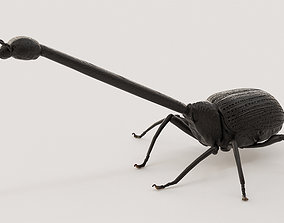 Giraffe weevil 3D print model