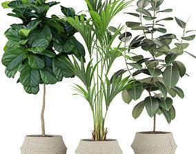 Plants collection 364 3D model
