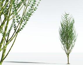 3D EVERYPlant Ridged Horsetail Tree 04 --12 Models--