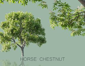 Horse Chestnut Trees 3D model
