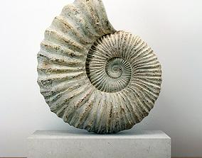 3D Large Ammonite Mounted on a Limestone Base