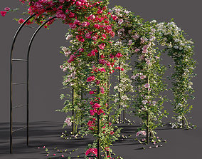 3D Arch pergola with roses