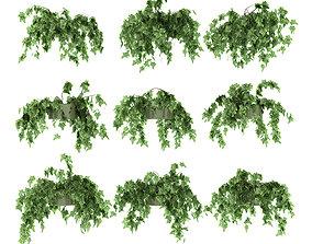 Ivy in pot 9 models