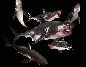 3D asset Great White Shark Model 7 animations Pack