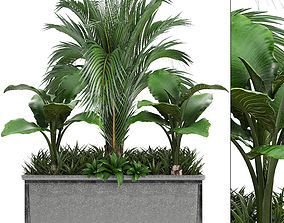 Collection Exotic plants 3D monstera