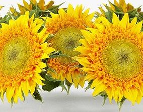 3D asset Sunflower Yellow