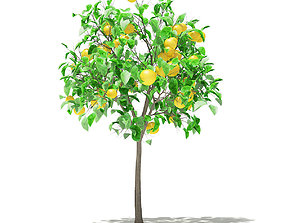 Grapefruit Tree with Fruits 3D model