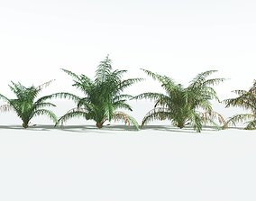 3D EVERYPlant Seashore Palm EXT --22 Models--