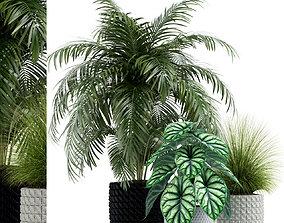 Plants collection 138 3D