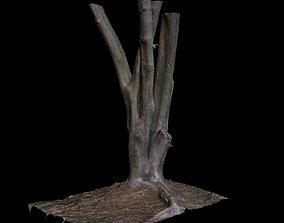 3D Ficus