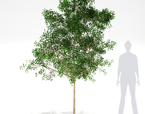 Tree Cluster 001 3D