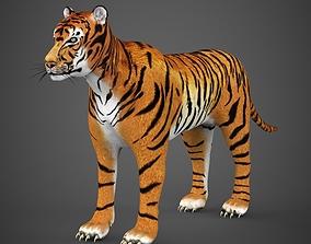 Realistic Tiger 3D model