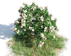 Gardenia 31 am154 3D model