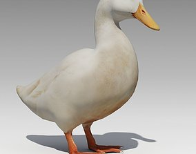 3D asset Duck Animated